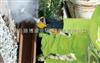 进口美国华瑞RAE,MiniRAE3000,VOC检测仪,PGM-7320挥发性气体检测